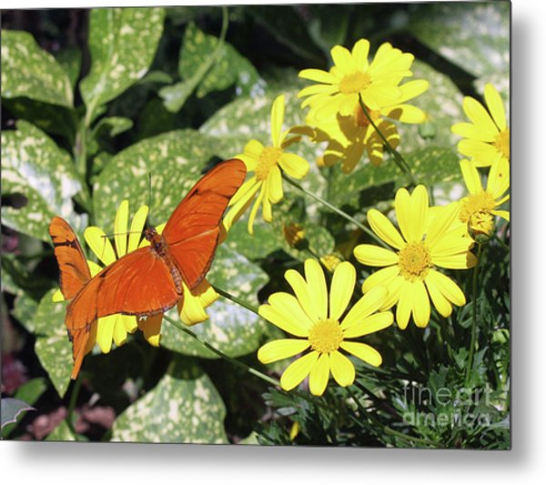 Beautiful Butterflies Metal Print