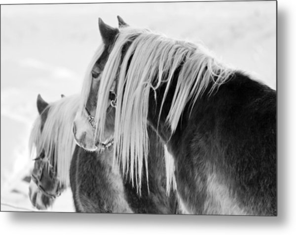Beautiful Horse Metal Print by Martin Rochefort