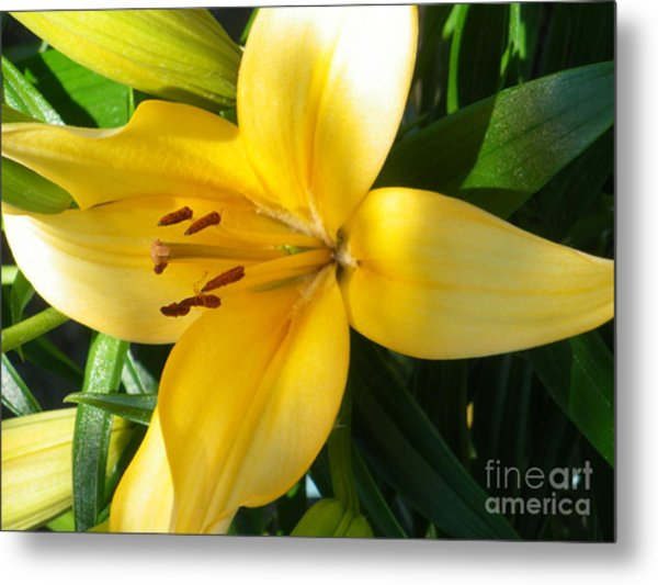Beautiful Lily I Metal Print