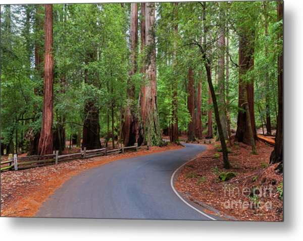 Beautiful Redwood Grove Metal Print