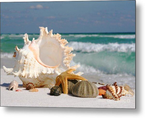 Beautiful Sea Shell On Sand Metal Print