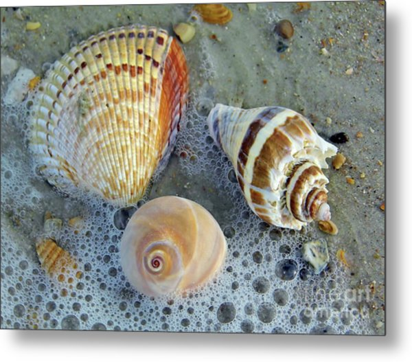 Beautiful Shells In The Surf Metal Print