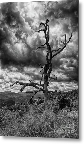 Beautifully Dead In Black And White Metal Print