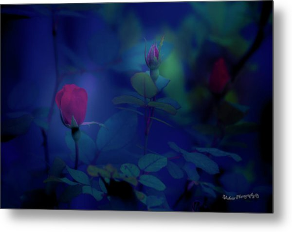 Beauty And The Mist Metal Print