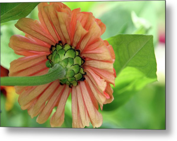 Beauty From Behind Metal Print by Roxanne Marshal