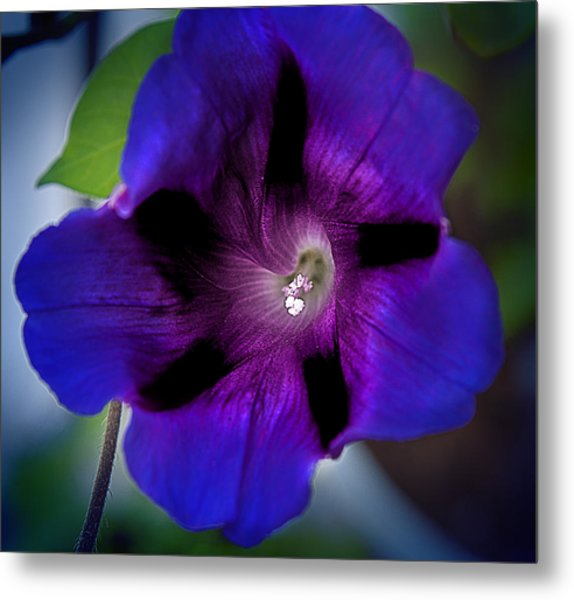 Beauty In Blue Metal Print