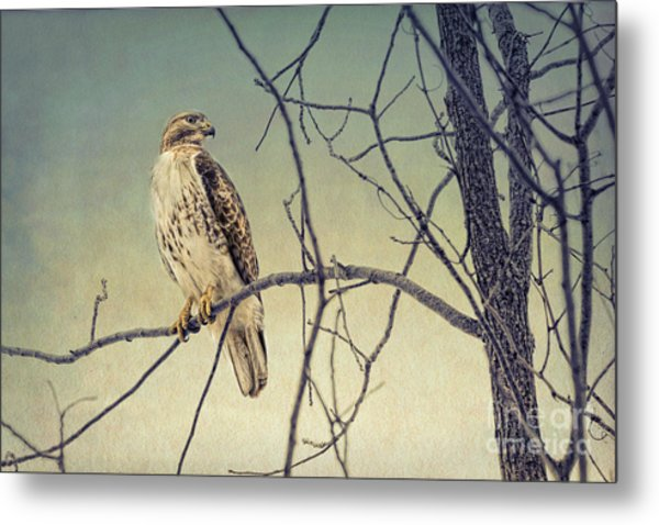 Red-tailed Hawk On Watch Metal Print