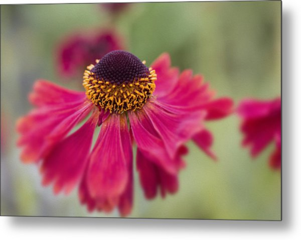 Beauty In The Flower Bed Metal Print