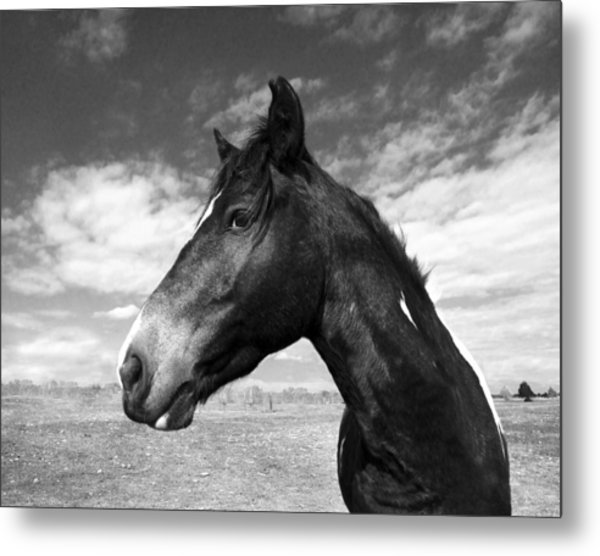 Beauty Metal Print by Jimmy Bruch