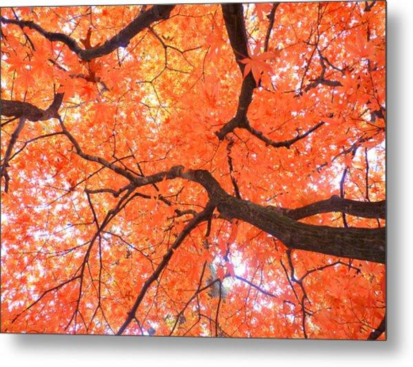 Beauty Of Fall Metal Print by Elizabeth