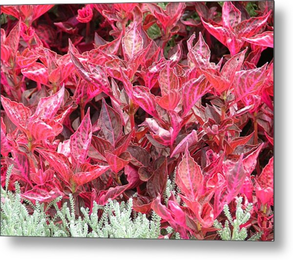 Beauty Of Nature Colors Metal Print