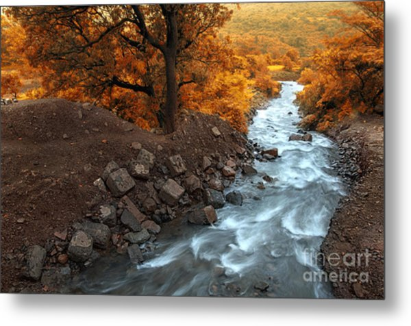 Beauty Of The Nature Metal Print