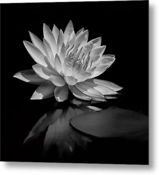 Beauty Of The Pond Metal Print