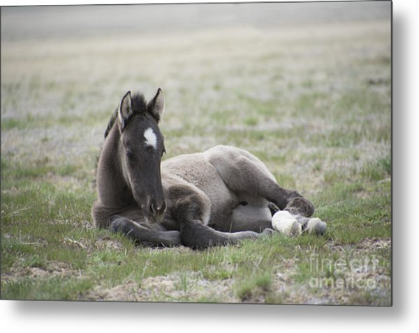 Beauty Rest Metal Print by Nicole Markmann Nelson