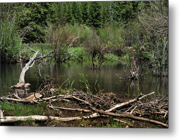 Metal Print featuring the photograph Beaver Pond by Ron Cline