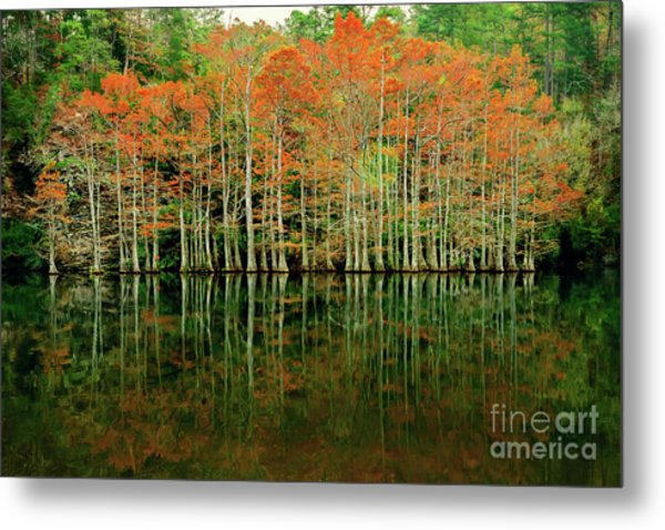 Beaver's Bend Cypress All In A Row Metal Print
