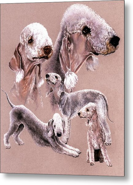 Bedlington Terrier Metal Print