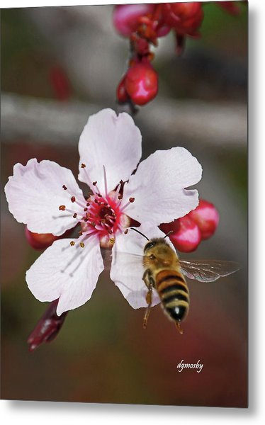 Bee And Blossom 9592 Metal Print by David Mosby