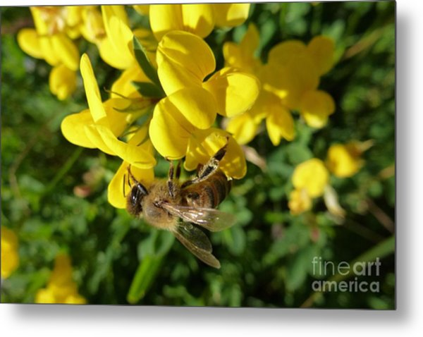 Bee And Broom In Bloom Metal Print