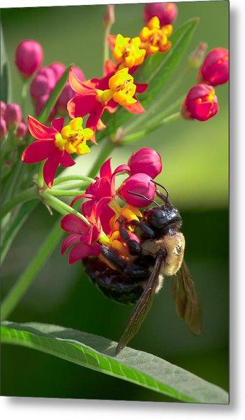 Bee And Flowers Metal Print by E Mac MacKay