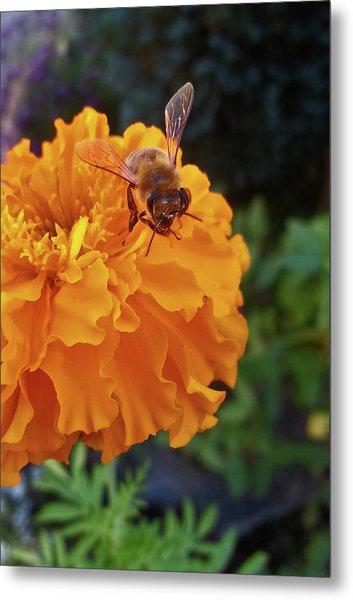 Bee And Marigold Metal Print