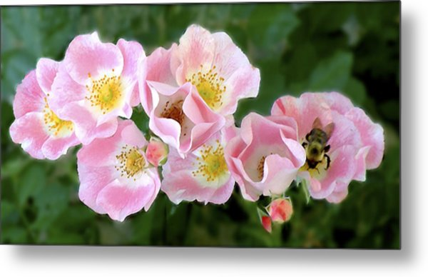 Bee And Roses Metal Print