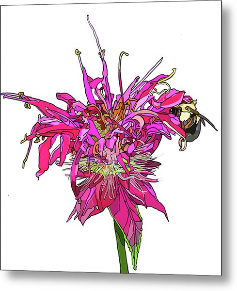 Bee Balm Metal Print