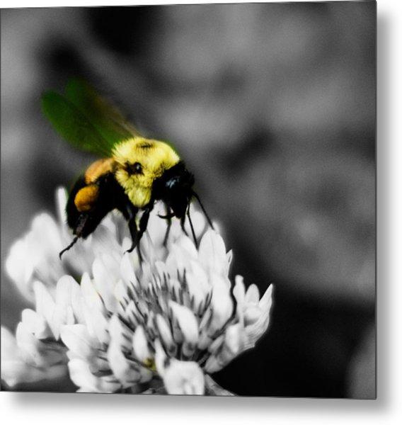 Bee Bee Metal Print