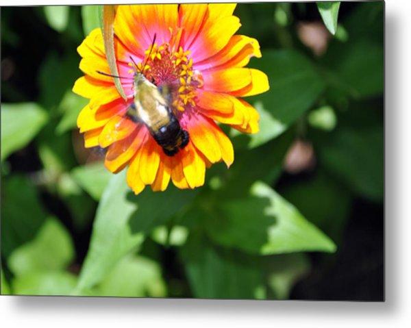 Bee Easy Metal Print by Dion Baker