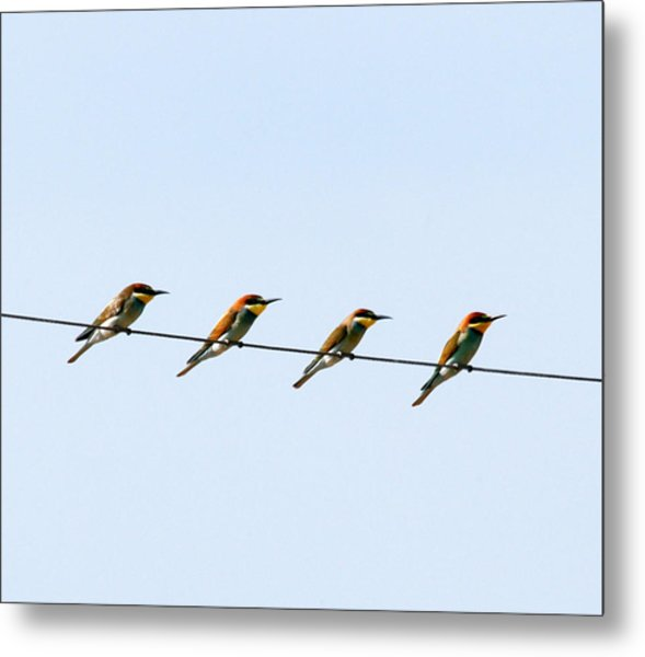 Bee Eaters On A Witre  Metal Print