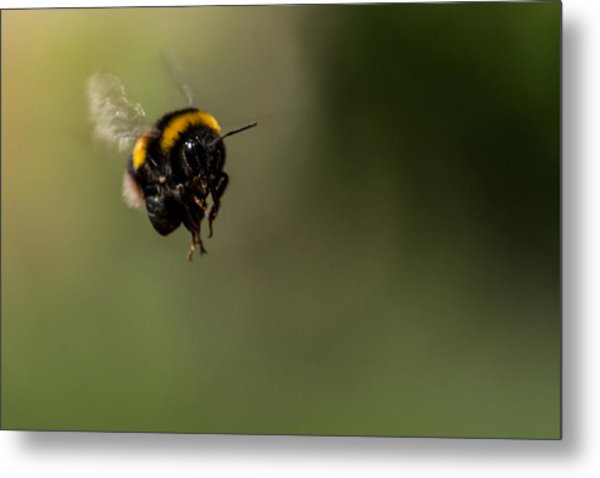 Bee Flying - View From Front Metal Print