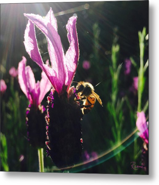 Bee Illuminated Metal Print
