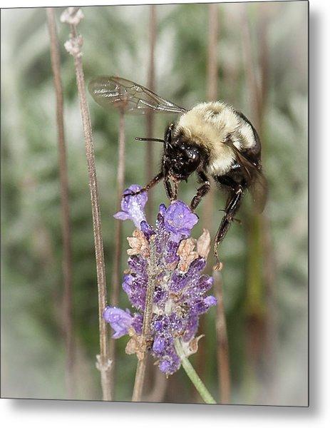 Bee Lands On Lavender Metal Print