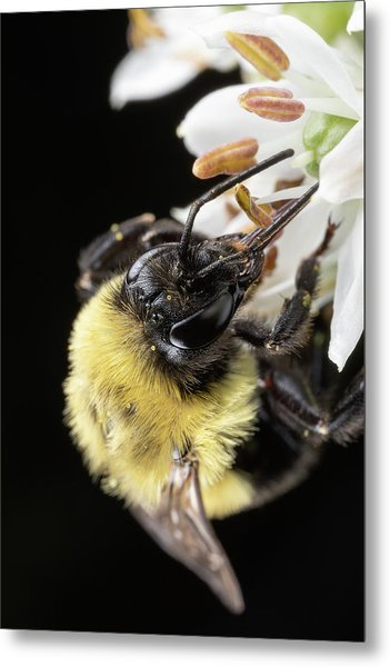 Bee Macro 1 Metal Print