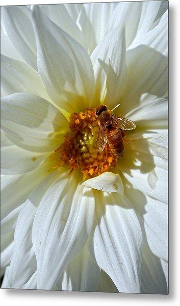 Bee Nice Dahlia  Metal Print