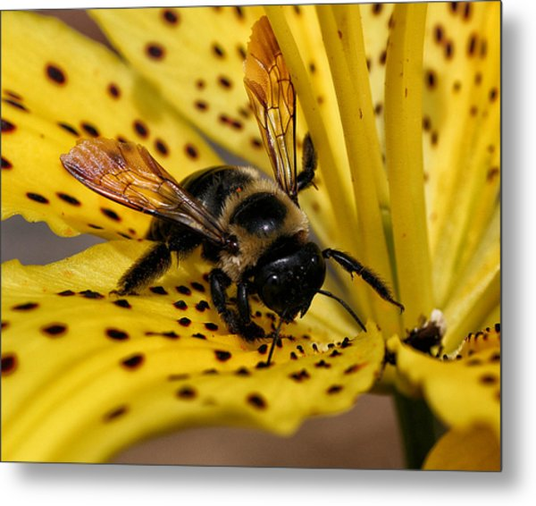 Bee On A Lily Metal Print