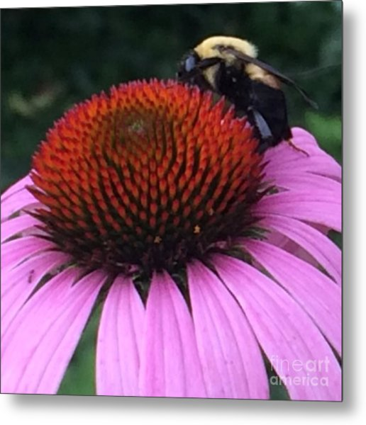 Bee On Flower By Saribelle Rodriguez Metal Print