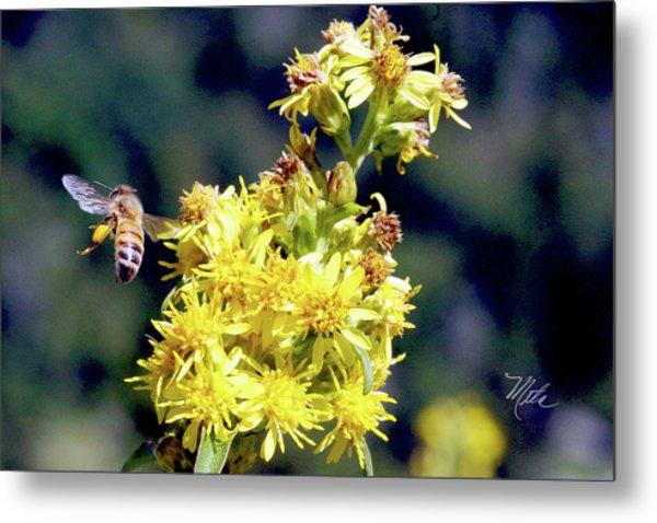 Bee On Goldenrod Metal Print