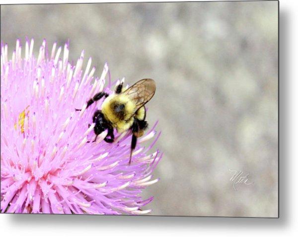 Bee On Pink Bull Thistle Metal Print