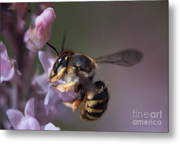Bee Sipping Nectar Metal Print