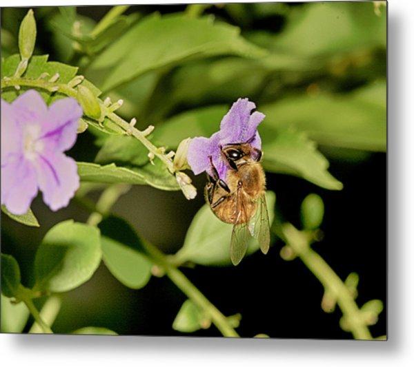 Bee Taking Pollen Metal Print