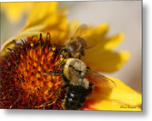 Bee Two Metal Print by Silvana Siudut