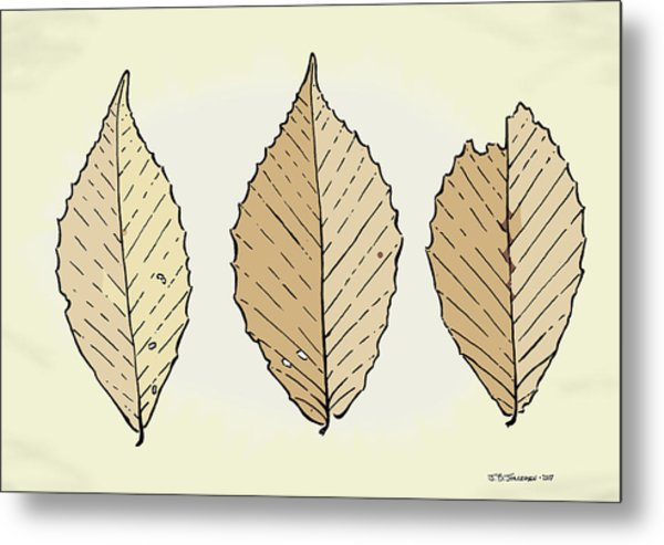 Beech Leaf Illustration Metal Print by Jamie Jorgensen