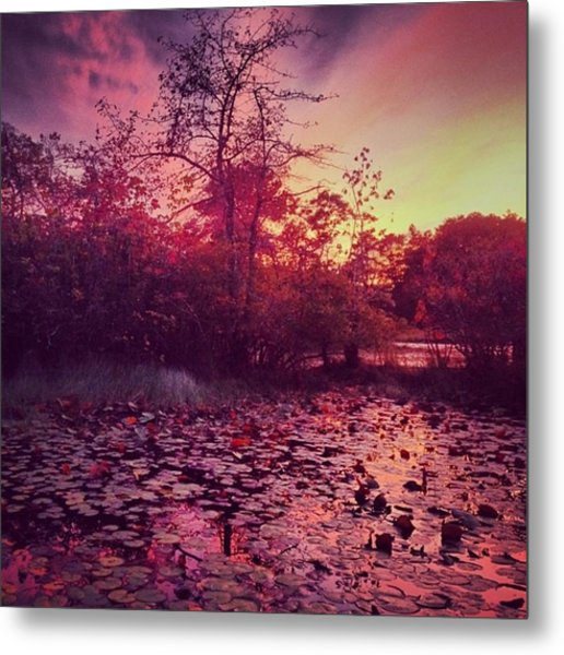 #beechforest #provincetown #sunset Metal Print by Ben Berry