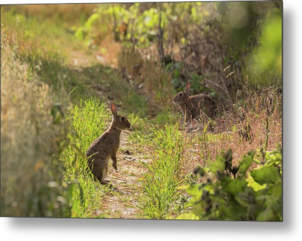 Been Spotted Metal Print