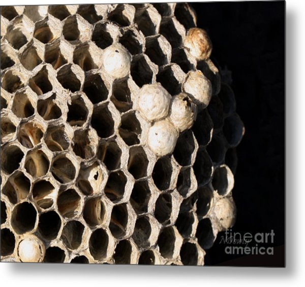 Bee's Nest Metal Print