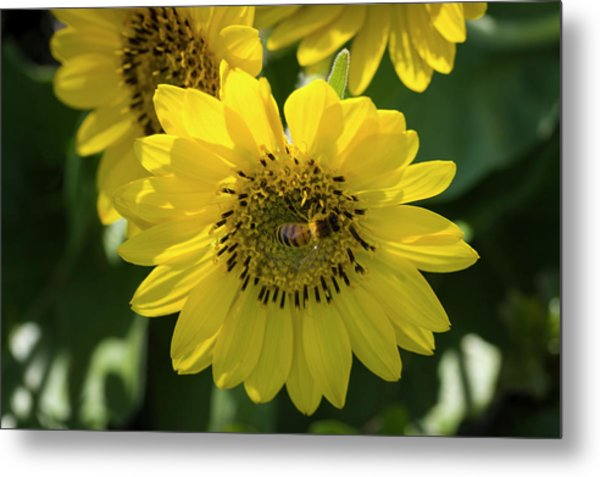 Bee's Work Is Never Done Metal Print