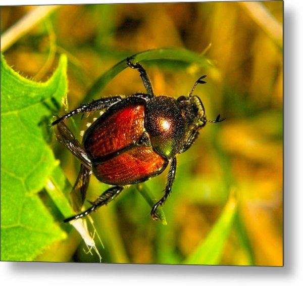 Beetle Take-off Metal Print by Pradeep Bangalore