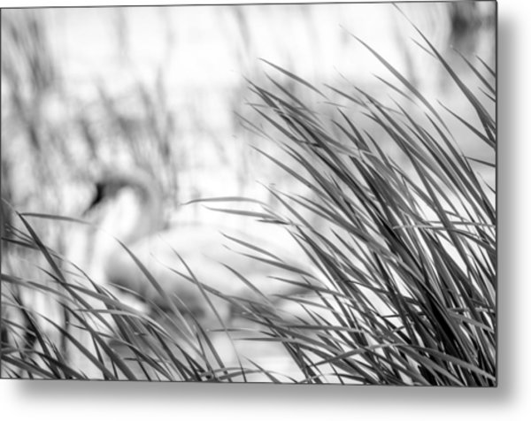 Behind The Grass Metal Print
