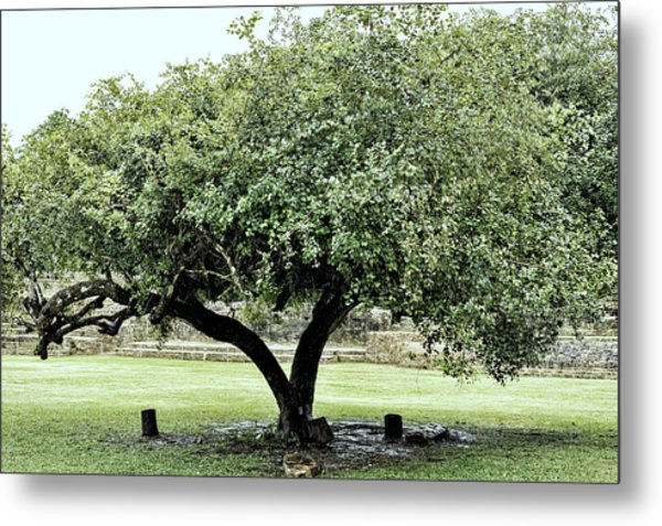 Metal Print featuring the photograph Belize Tree by Linda Constant